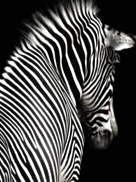 black white 011
