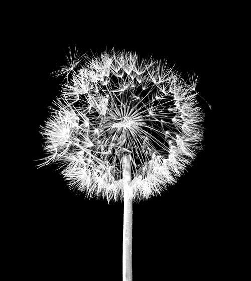 black white 012