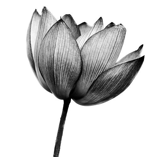 black white 008