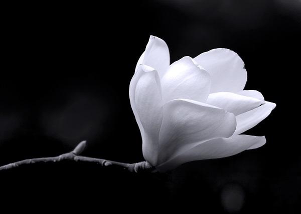 black white 026