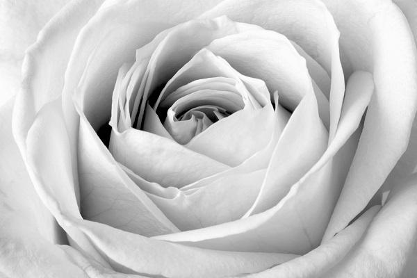 black white 029