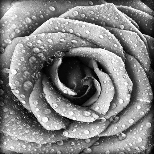 black white 032