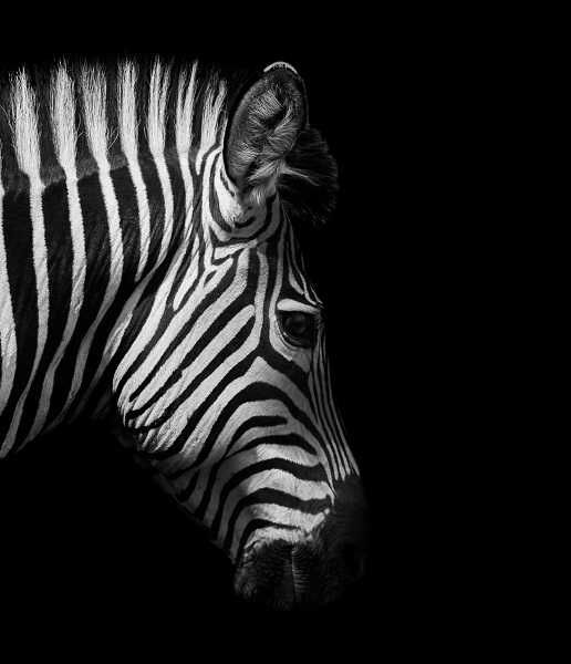 black white 021