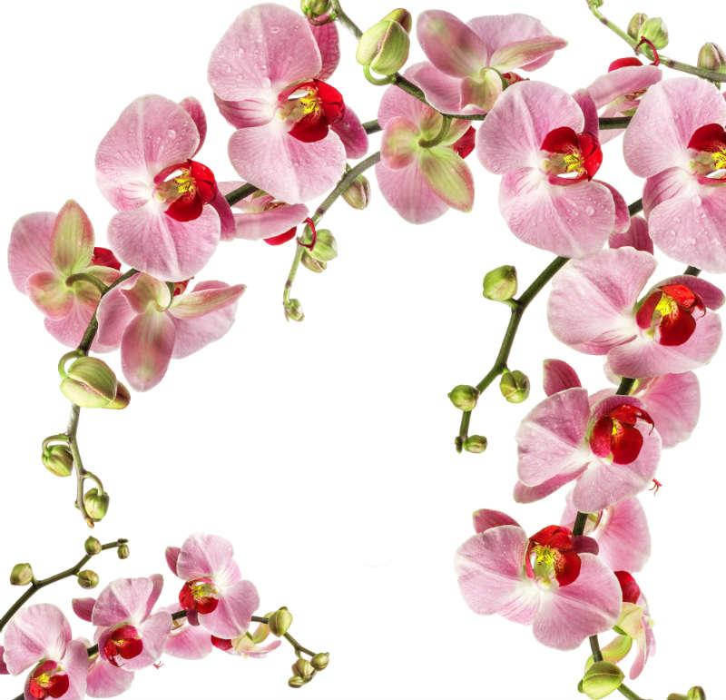 flowers 028
