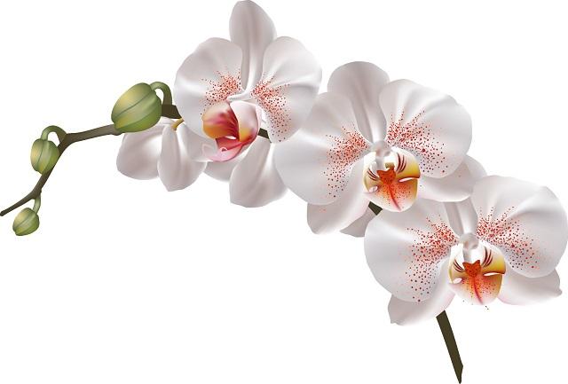 flowers 031