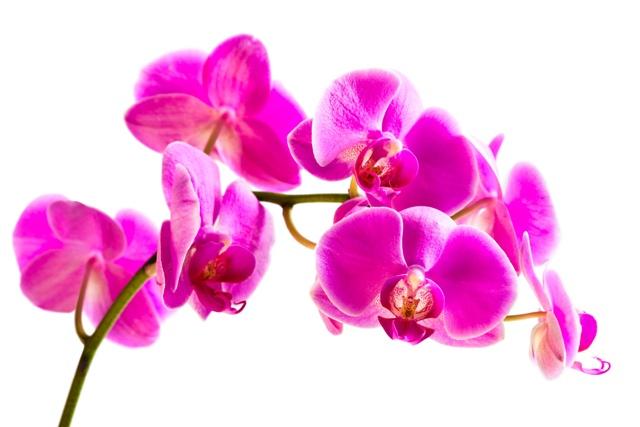 flowers 033