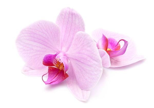 flowers 039