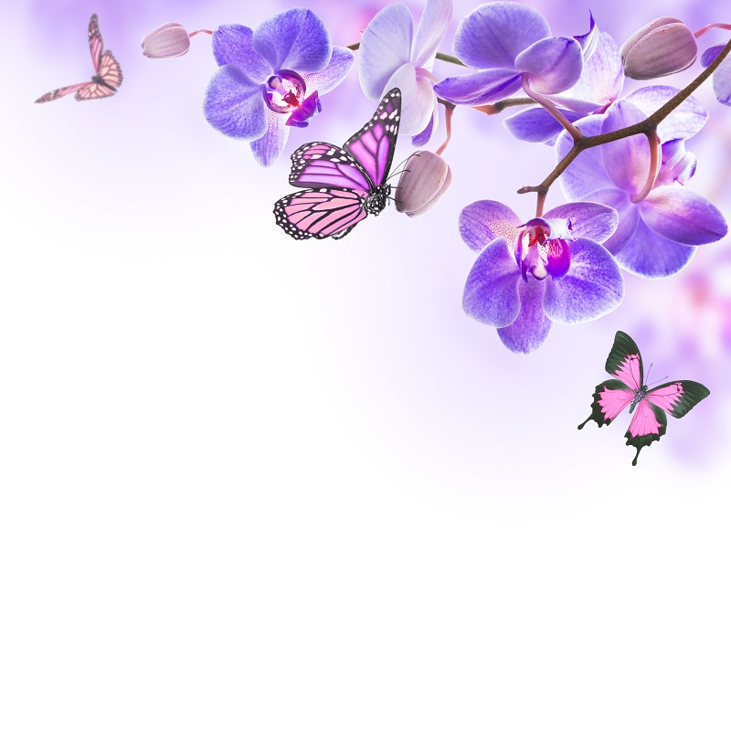 flowers 049