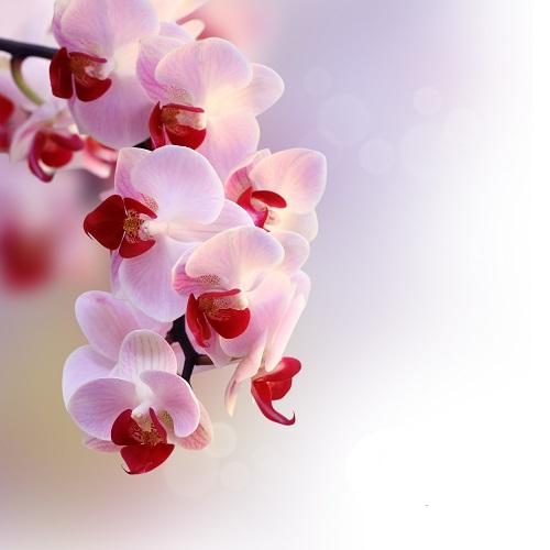 flowers 043