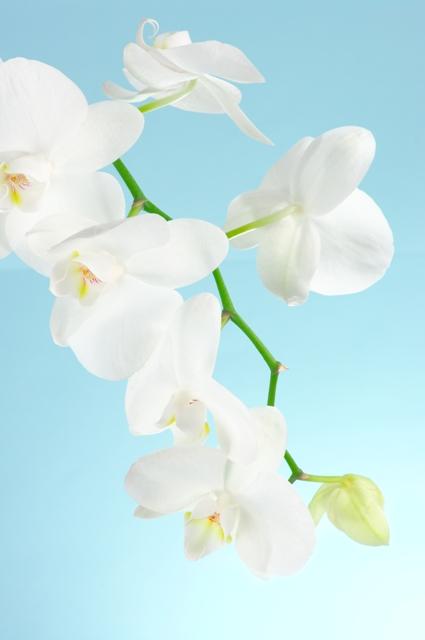 flowers 051.JPG