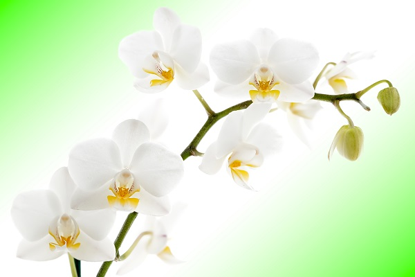 flowers 053
