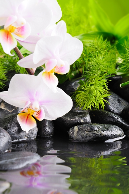flowers 056.JPG