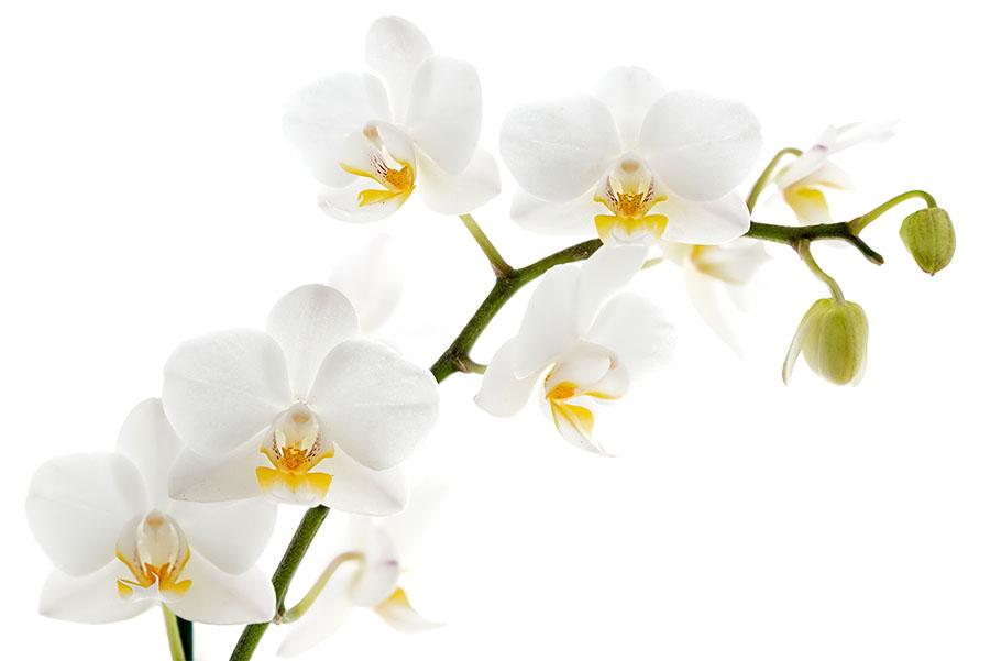 flowers 053c