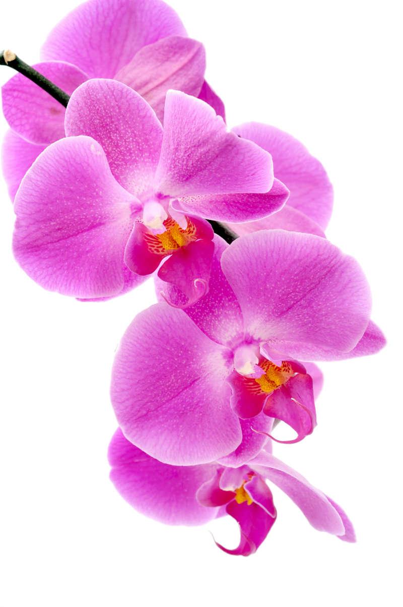 flowers 062