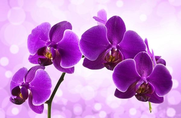 flowers 065