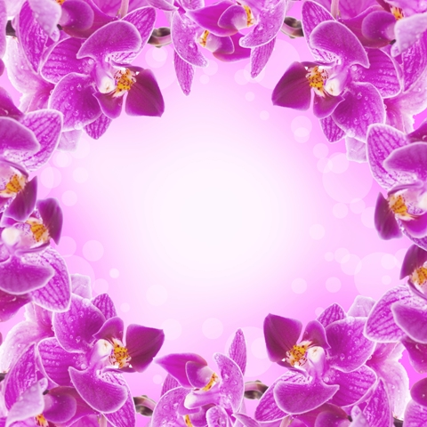 flowers 066