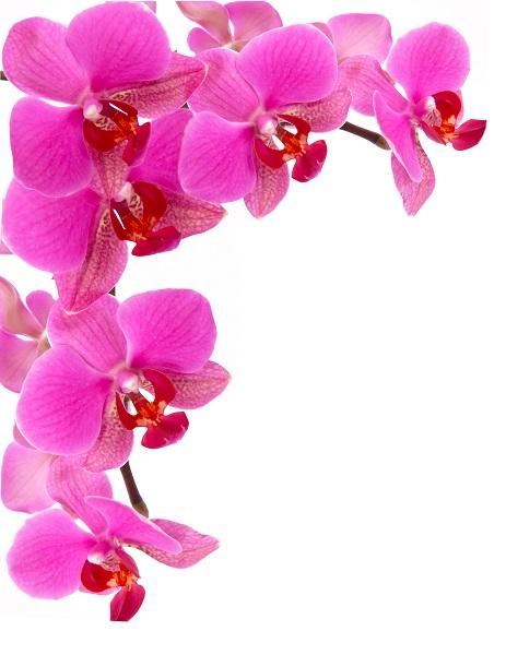 flowers 067