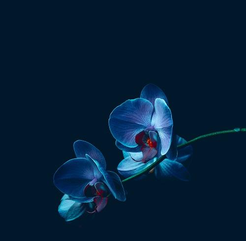 flowers 072