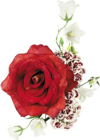 flowers 077