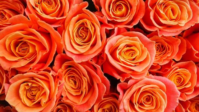 flowers 082