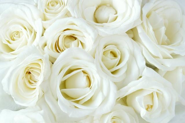 flowers 087.JPG