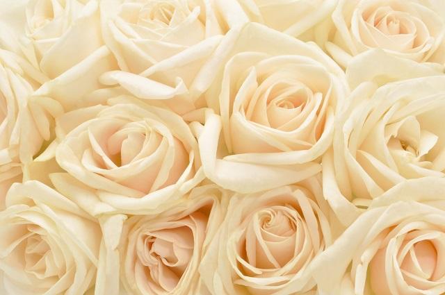 flowers 085
