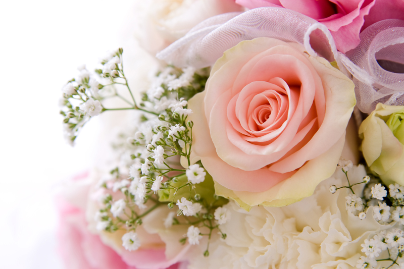 flowers 093