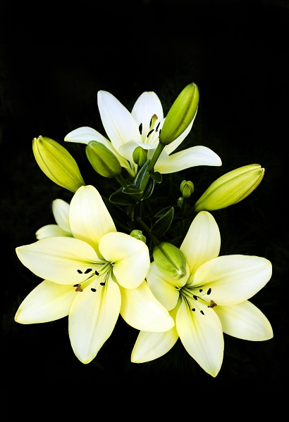 flowers 096