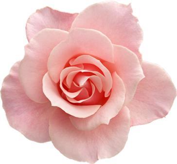 flowers 097