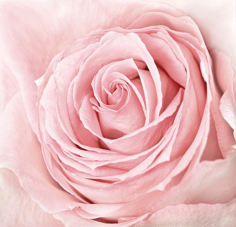 flowers 098