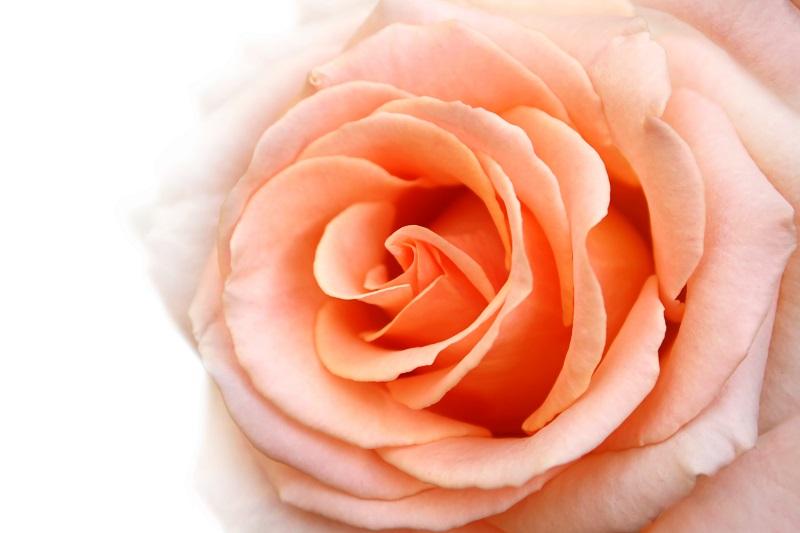 flowers 099