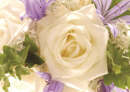 flowers 108