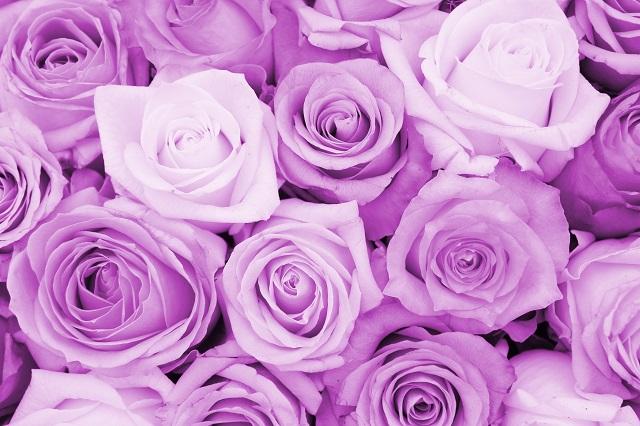 flowers 113