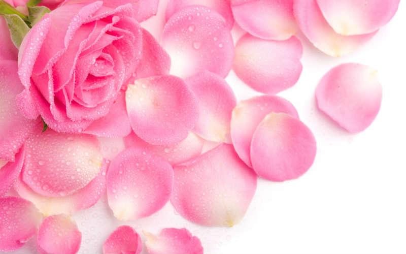 flowers 117