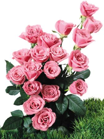 flowers 118