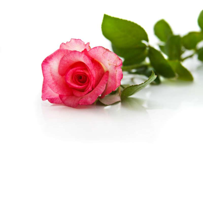 flowers 119