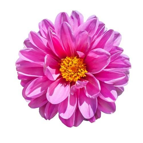 flowers 122