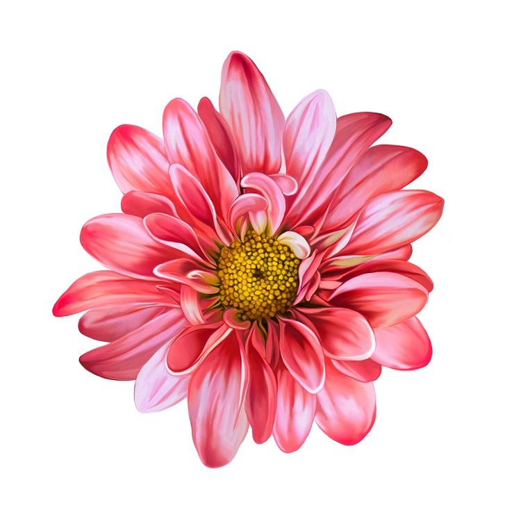 flowers 125