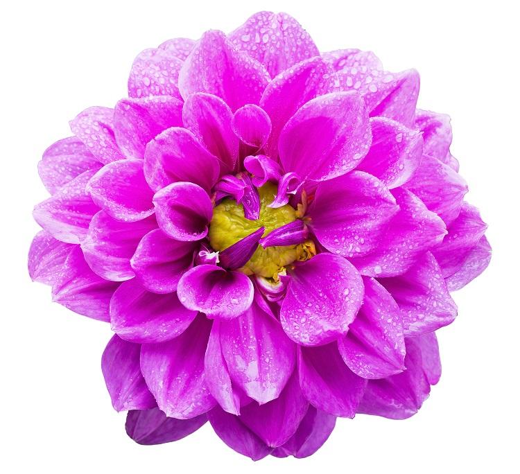 flowers 130