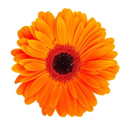 flowers 133