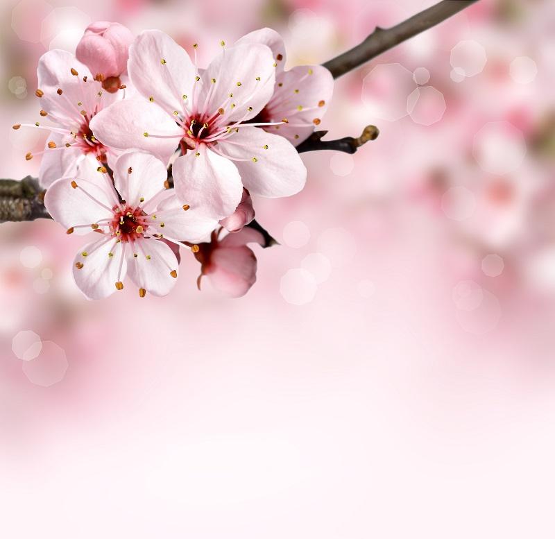flowers 144