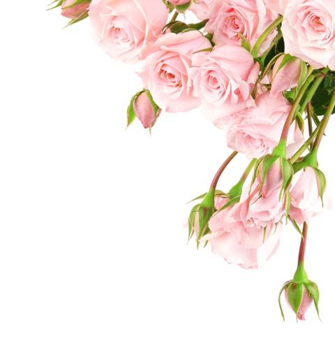 flowers 151.JPG