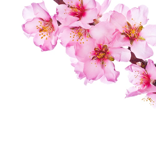 flowers 150
