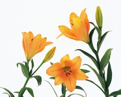 flowers 156.JPG
