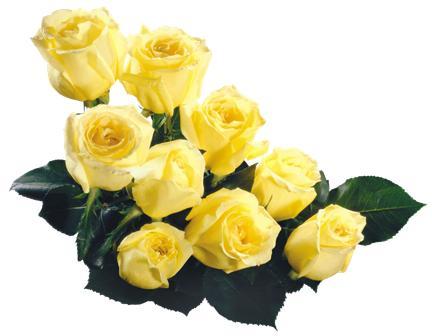flowers 154