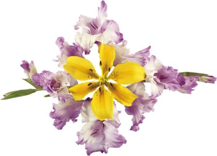 flowers 158