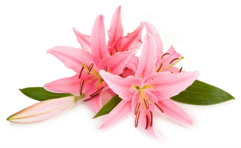 flowers 166