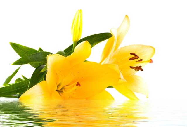flowers 167