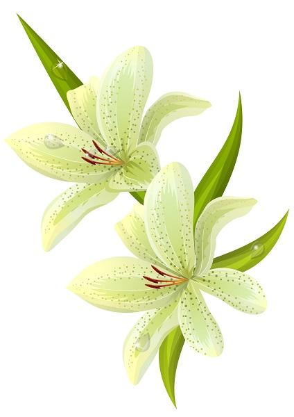 flowers 172