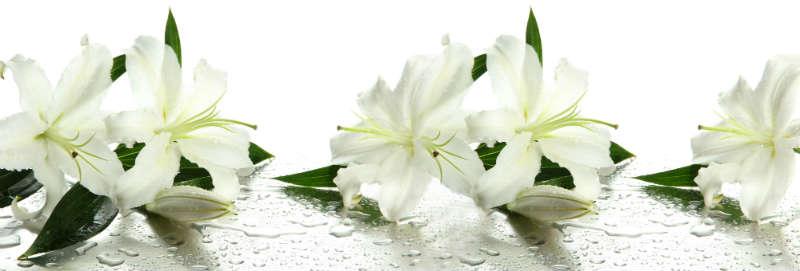 flowers 173